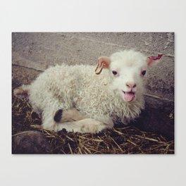Sheep #5 Canvas Print
