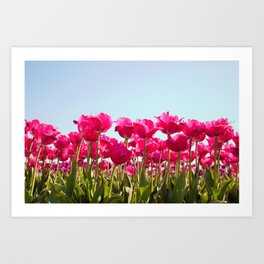 Tulips in Bloom! Art Print