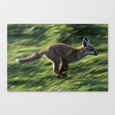 Fox cub on the Run Canvas Print