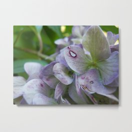 Fairy's Bed Metal Print