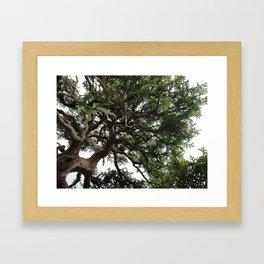 Bonsai Tree Framed Art Print