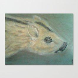 Wild piglet Canvas Print