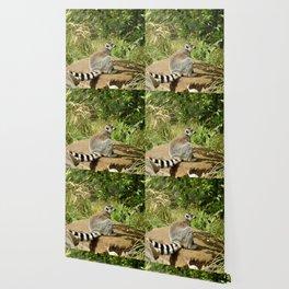 cute lemur Wallpaper