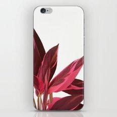 Red Leaves II iPhone & iPod Skin