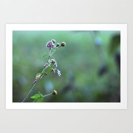 Wild flowers and cobwebs Art Print