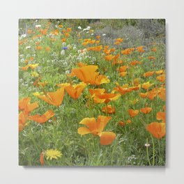 california poppy VIII Metal Print