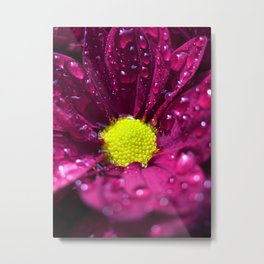 purple bloom II Metal Print