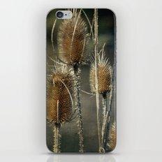 Teasel iPhone & iPod Skin