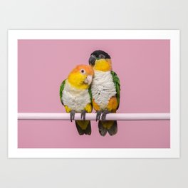 Two caique birds sitting together on a pink background Art Print