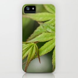Japanese Maple in Green iPhone Case