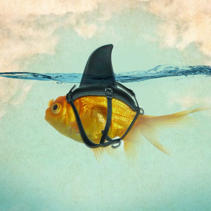 Brilliant DISGUISE - Goldfish with a Shark Fin Duvet Cover