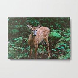 Forest Deer XXII Metal Print