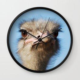 Ostrich the largest bird Wall Clock
