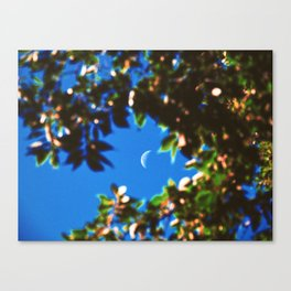 Summer Untitled Canvas Print