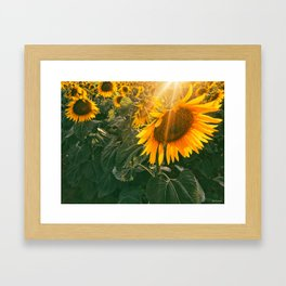 summer in the fields Framed Art Print