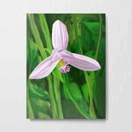 Rose Pogonia Orchid Metal Print