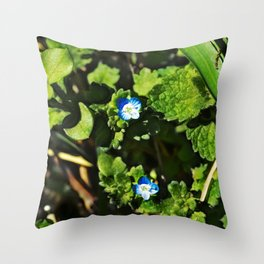 Persian Speedwell 1 Throw Pillow