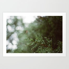 Pine Mist Series: 3 Art Print