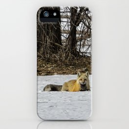 Beautiful Red Fox - No. 3 iPhone Case