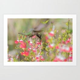 Anna's Hummingbird in Hot Lips Art Print