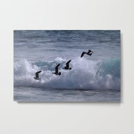 Sea Birds Metal Print