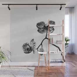 Simply a Orchid   Black & White Photography   Fine Art Photo Print Wall Mural