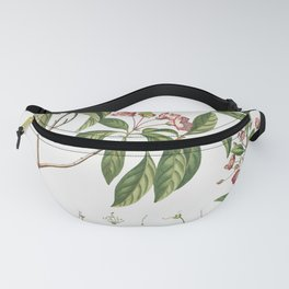 Plantae Selectae No 38 by Georg Dionysius Ehret Fanny Pack
