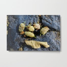 Mature white mulberries with one dry leaf Metal Print
