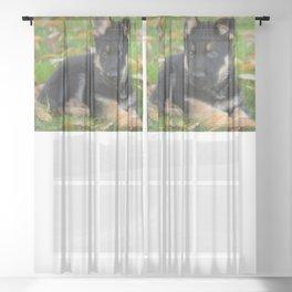 #8 #weeks #old #cute  #Shepherd #puppy Sheer Curtain