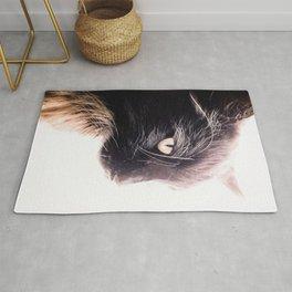 A Cat May Look at a King Rug