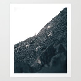 Mt. Rundle Mountain Goats Art Print