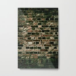 Dark ivy hedge creeper on wall Metal Print