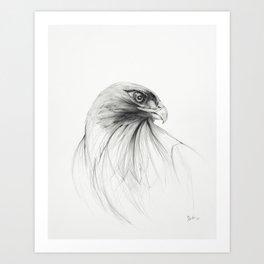 redtailed hawk Art Print