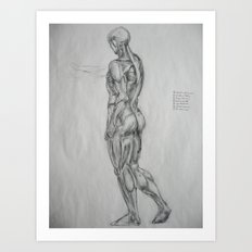 Muscle Anatomy II Art Print