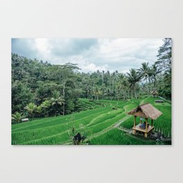 Ricefield in Ubud, Bali Canvas Print