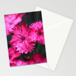 Pink Dianthus with Raindrops Stationery Cards