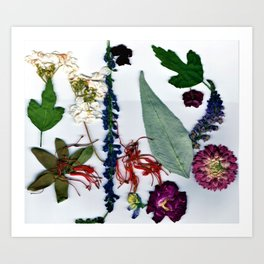 Floral Frenzy Art Print