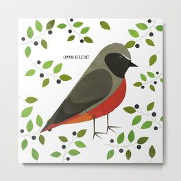 Common Redstart Metal Print