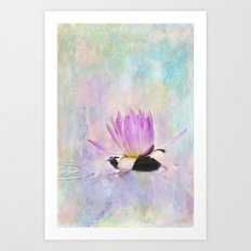 Painted Water Lily Art Print
