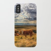 cows iPhone & iPod Cases featuring Resting Cows by David Pyatt