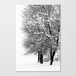 Wintery Trees Canvas Print