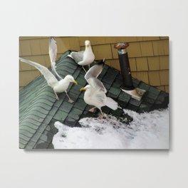 Brawling Gulls (4) Metal Print