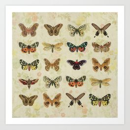Moths & Butterflies Art Print