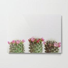Three Flowering Cacti Metal Print