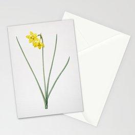 Vintage Narcissus Odorus Illustration Stationery Cards