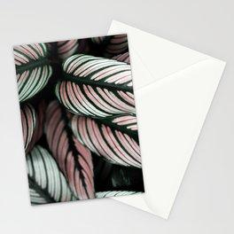 Calathea Whitestar Stationery Cards