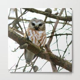 Bright eyed and bushy tailed Metal Print