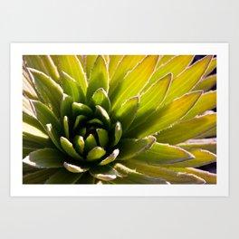 Maui succulent Art Print