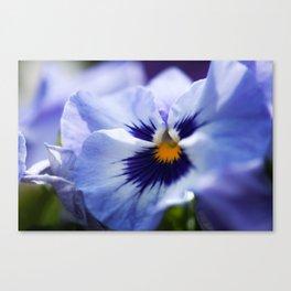 Blue Pansy Canvas Print