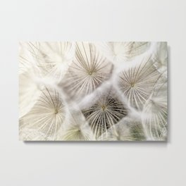 Into the deep- Dandelion Seed Head- Close up Metal Print
